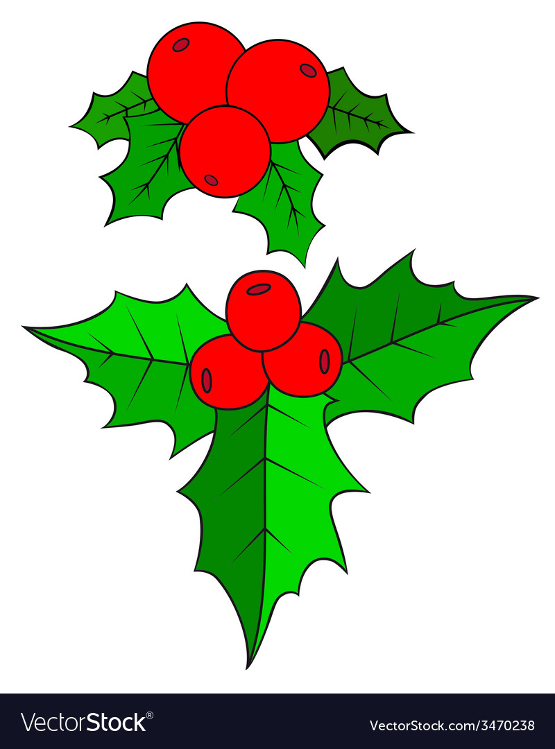 Christmas holly berry vector | Price: 1 Credit (USD $1)