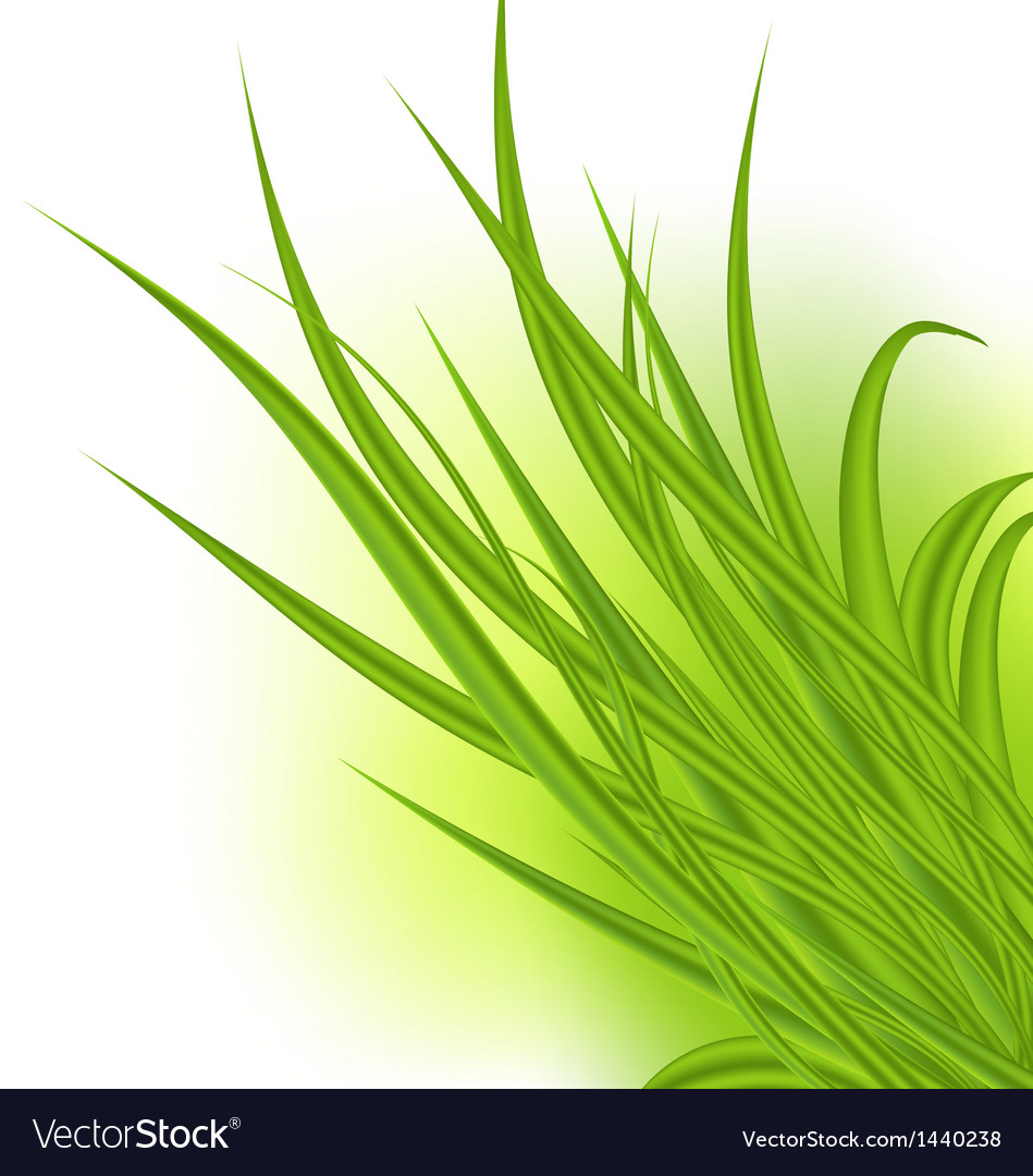 Green grass isolated on white background vector | Price: 1 Credit (USD $1)