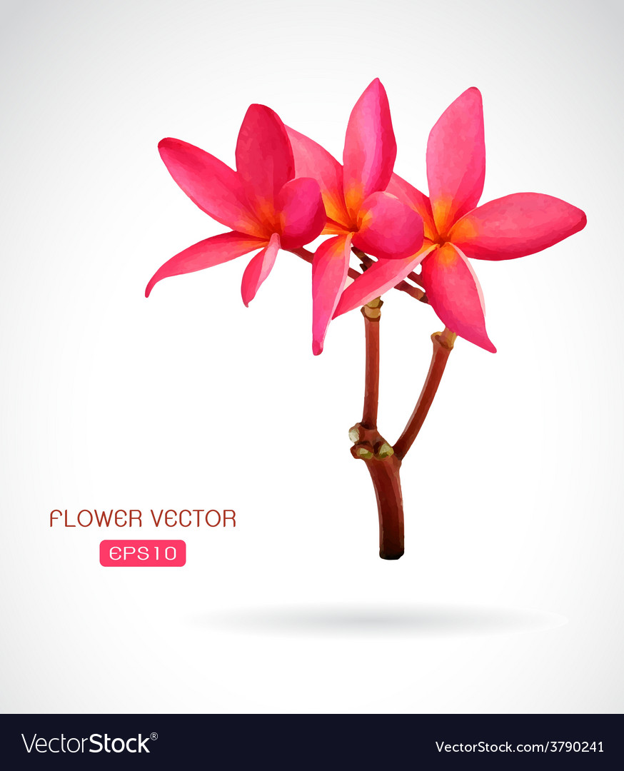 Image of frangipani flower vector | Price: 1 Credit (USD $1)
