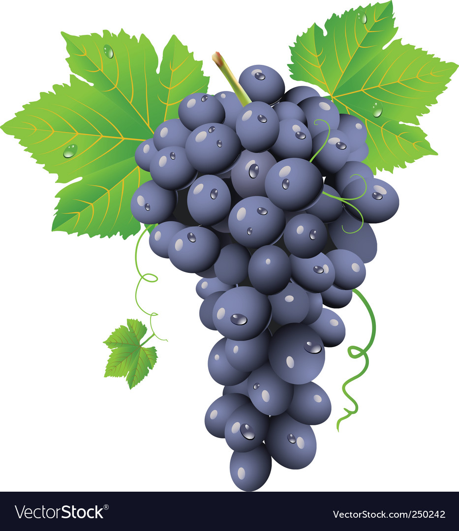 Grape cluster vector | Price: 3 Credit (USD $3)