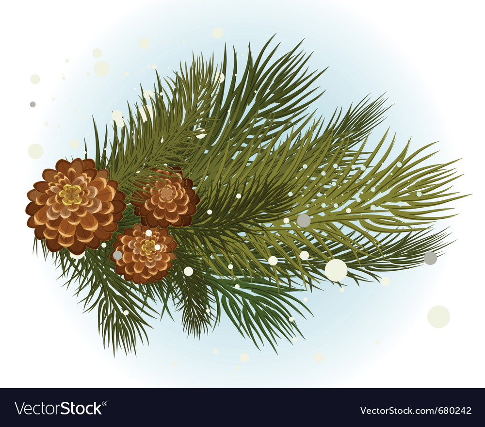Pine branch with cone vector | Price: 1 Credit (USD $1)