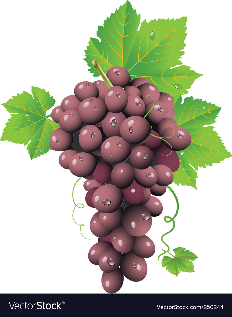 Grape cluster vector | Price: 3 Credit (USD $3)