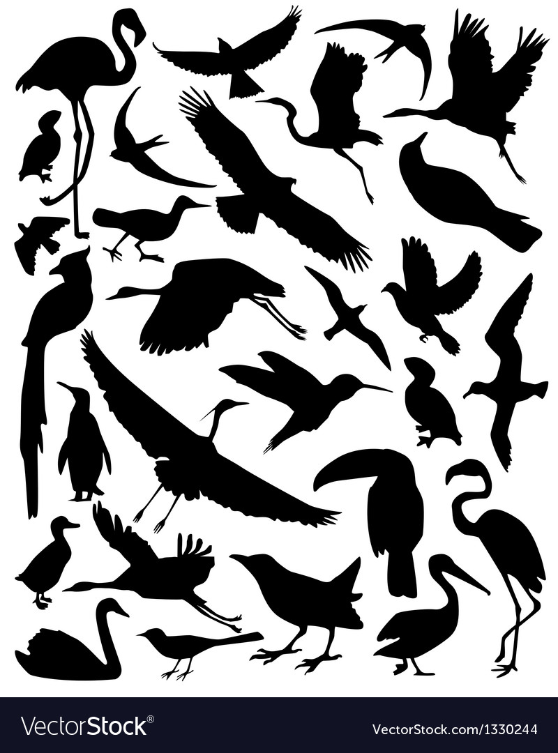 Silhouette of the birds vector | Price: 1 Credit (USD $1)