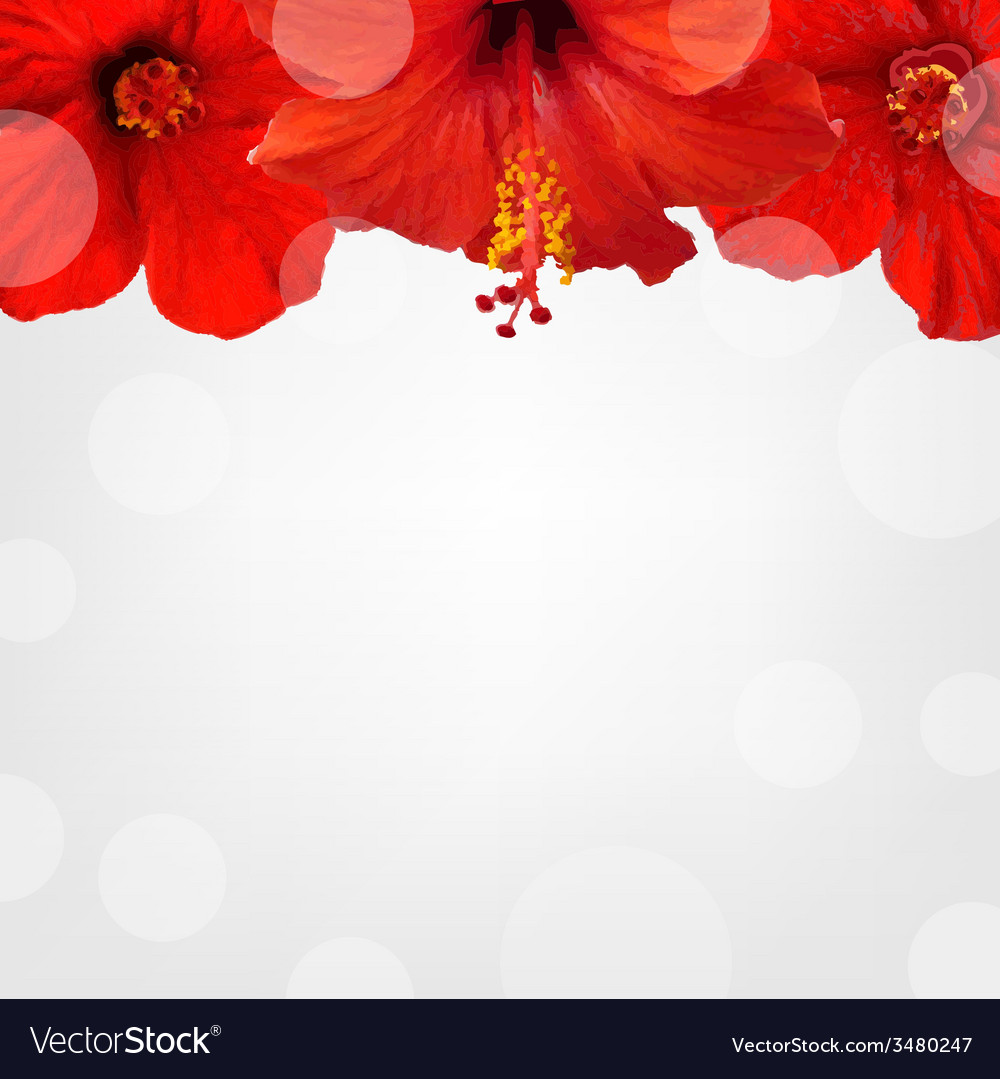 Flowers border vector | Price: 1 Credit (USD $1)