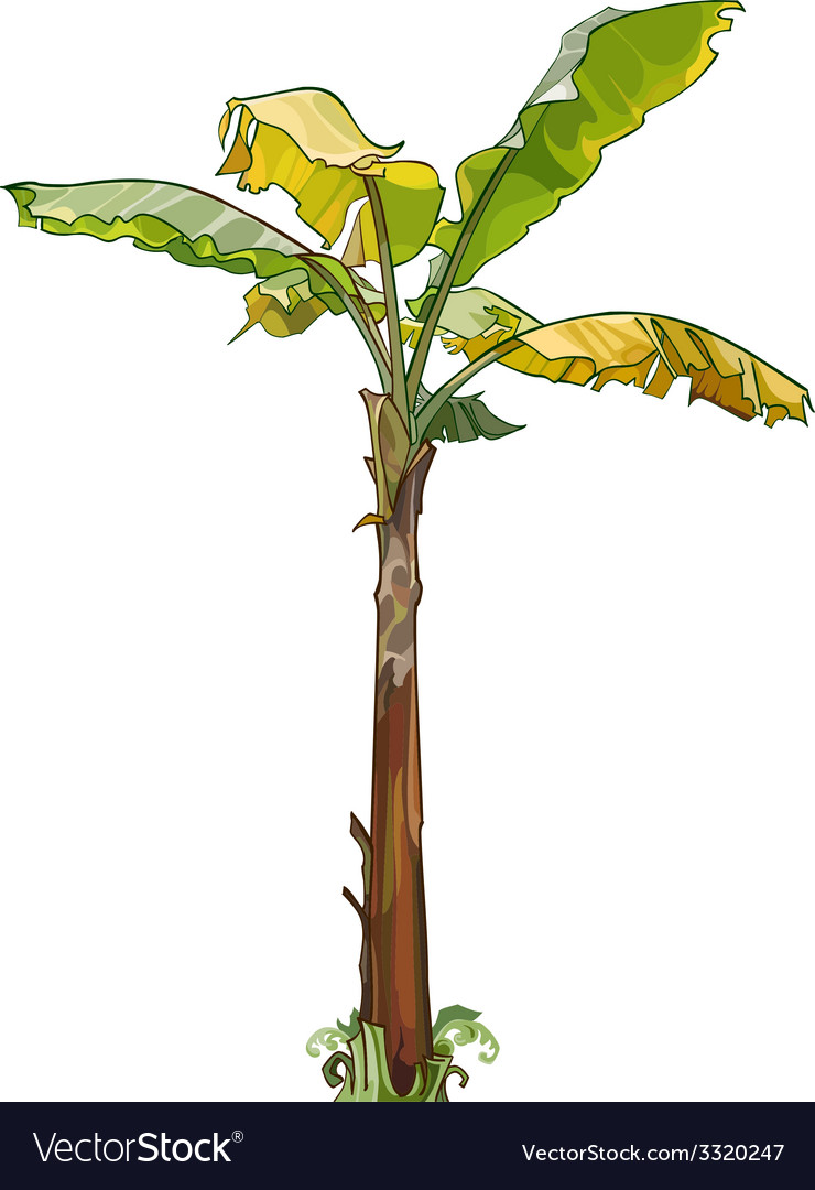 Palm banana tree with yellow leaves vector | Price: 1 Credit (USD $1)