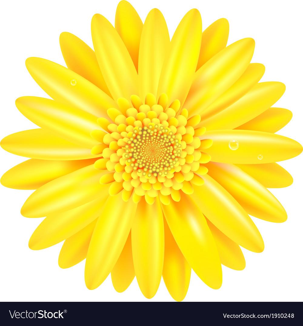 Yellow gerber vector | Price: 1 Credit (USD $1)