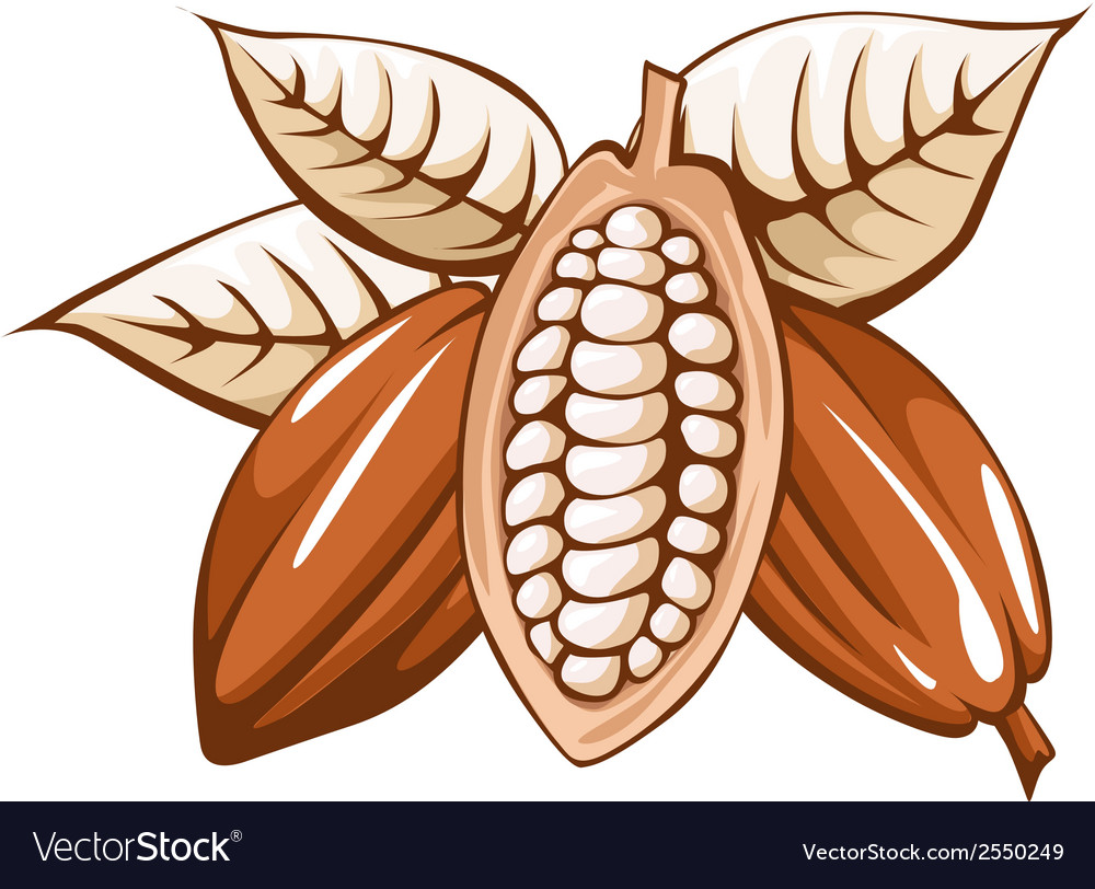 Cocoa bean vector | Price: 1 Credit (USD $1)