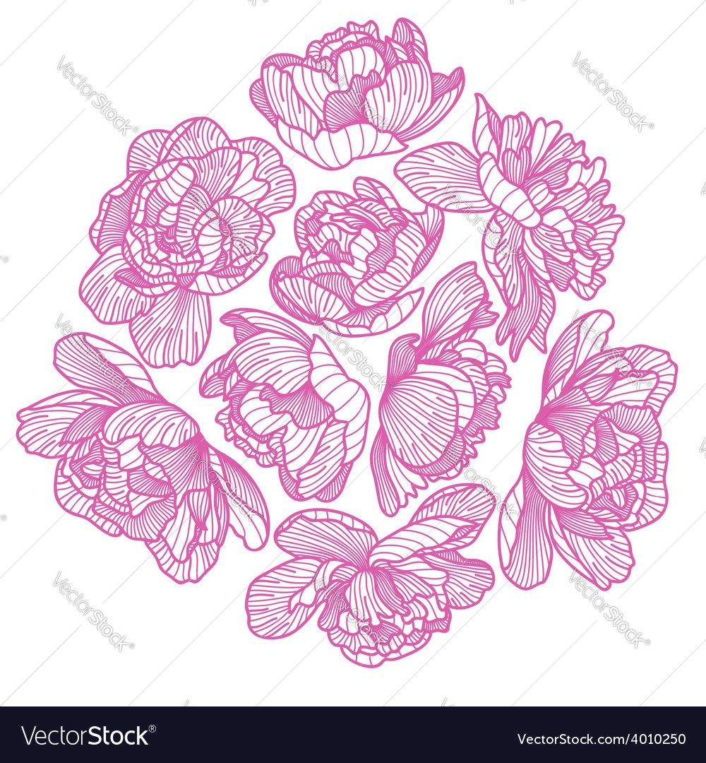 Peony drawing decorative composition vector   Price: 1 Credit (USD $1)
