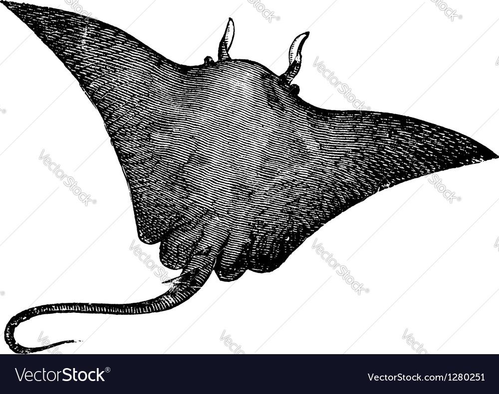 Manta ray engraving vector   Price: 1 Credit (USD $1)