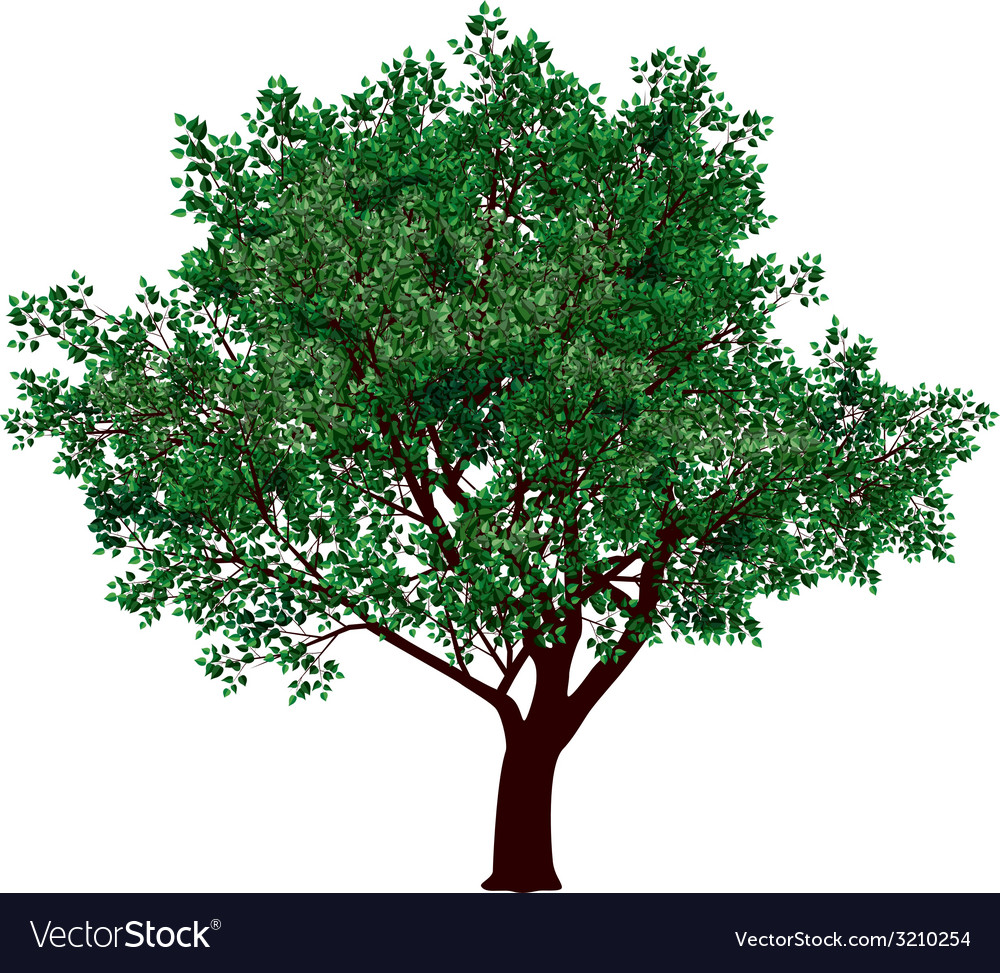 Foliage tree vector | Price: 1 Credit (USD $1)