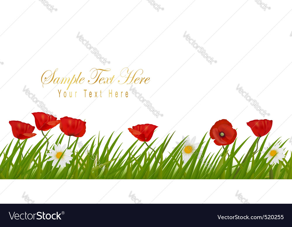 Poppy white background vector | Price: 1 Credit (USD $1)