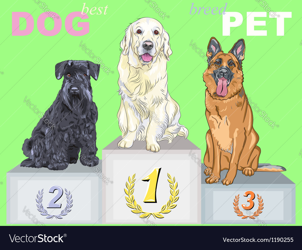 Smiling dog champion on the podium vector | Price: 3 Credit (USD $3)
