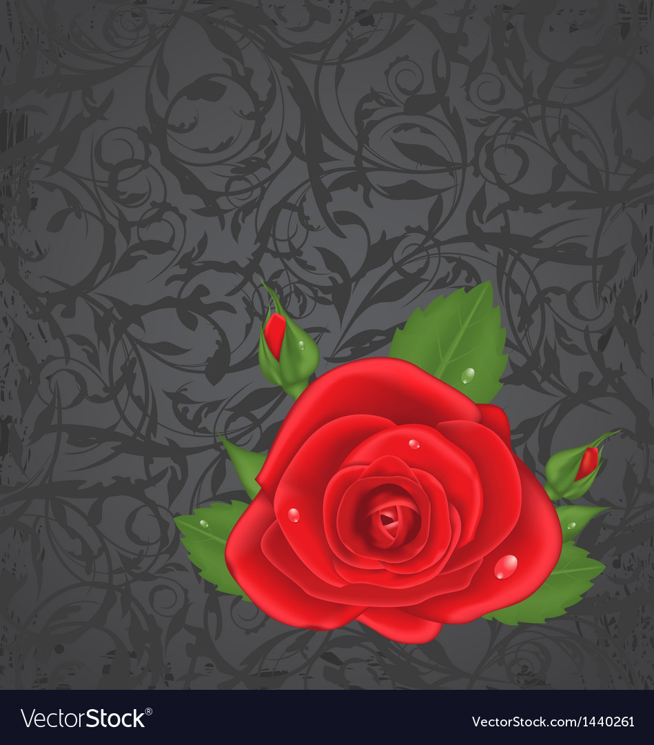 Close-up red rose isolated on grunge floral back vector | Price: 1 Credit (USD $1)