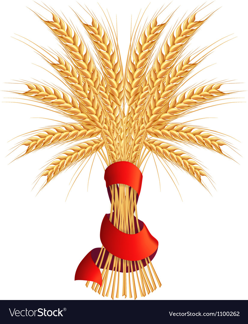 Sheaf of wheat vector | Price: 1 Credit (USD $1)