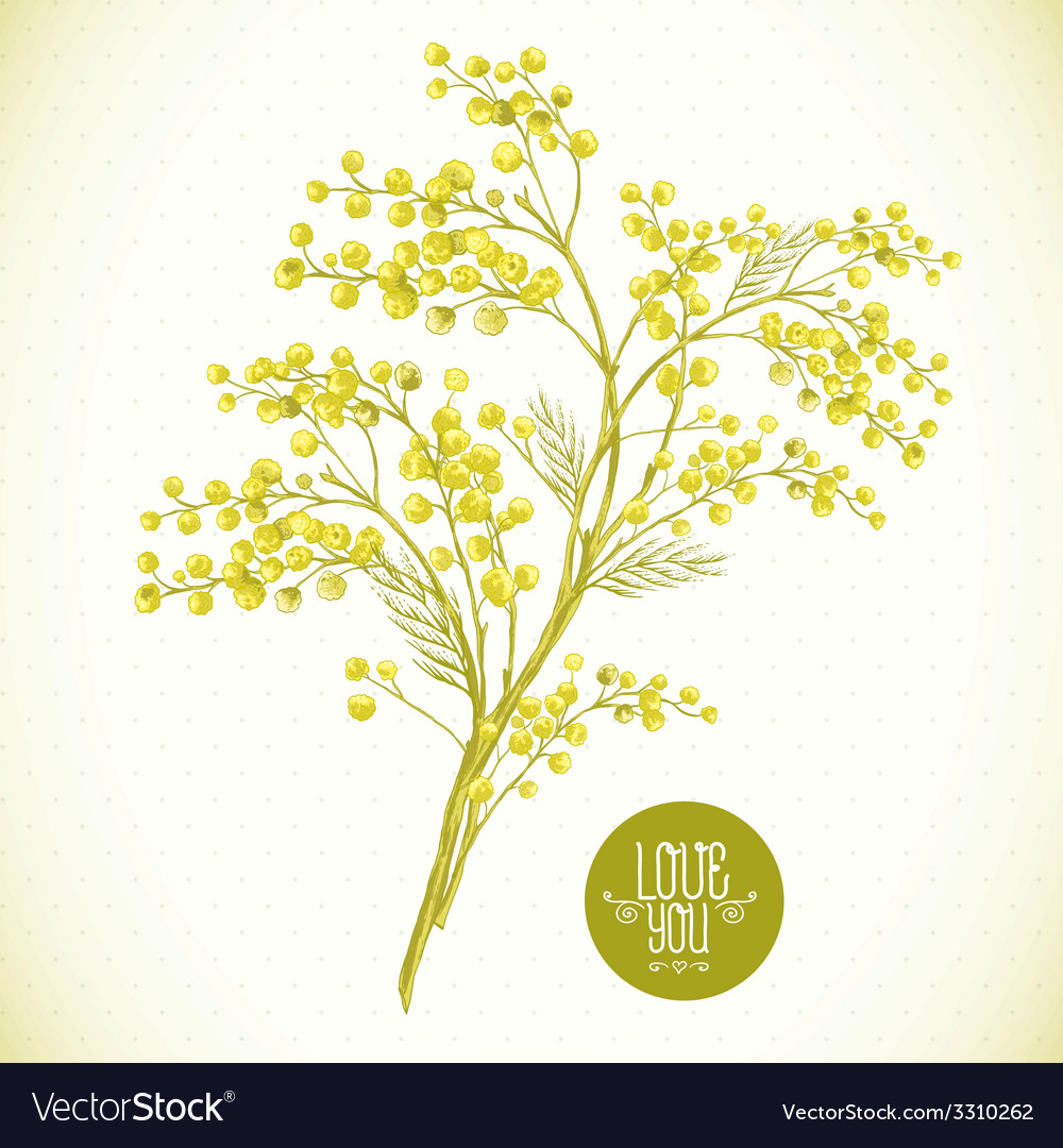 Sprig of mimosa spring background vector | Price: 1 Credit (USD $1)