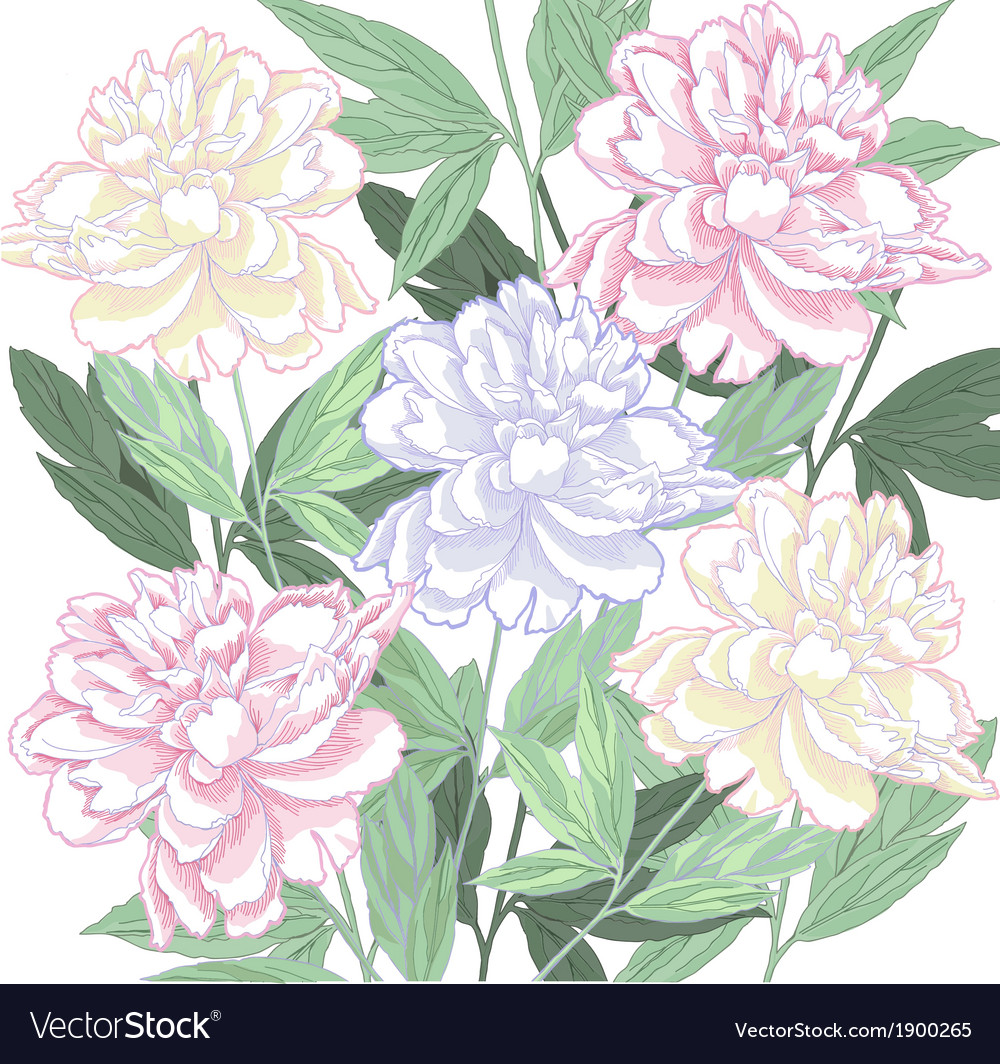 Background with pink and white peony vector | Price: 1 Credit (USD $1)