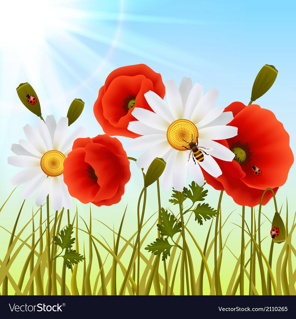 Poppy grass seamless wallpaper vector | Price: 1 Credit (USD $1)
