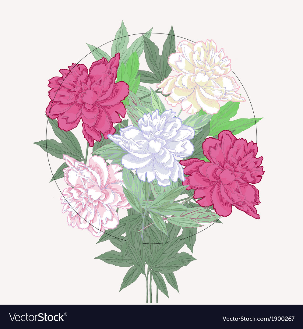 Bouquet with two pink and white peonies vector | Price: 1 Credit (USD $1)