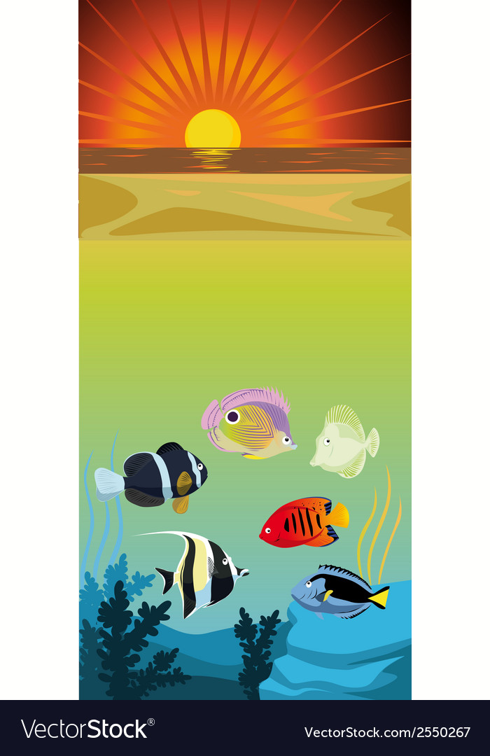 Color fishes vector | Price: 1 Credit (USD $1)