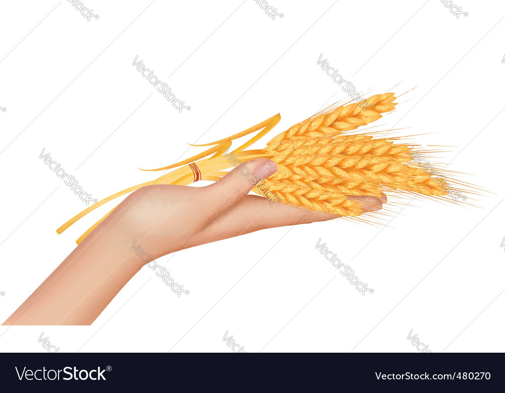Hand with ears of wheat vector | Price: 3 Credit (USD $3)