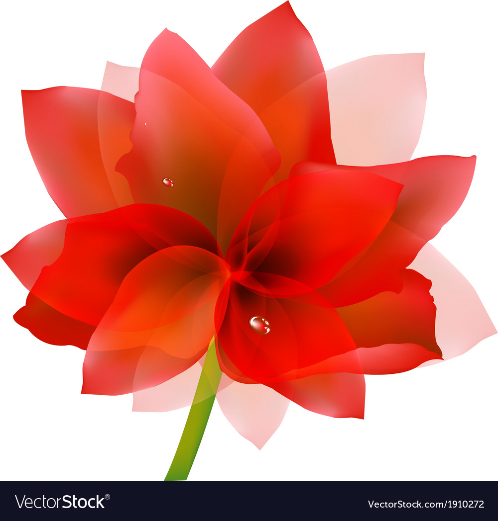 Red tulip with water drop vector | Price: 1 Credit (USD $1)