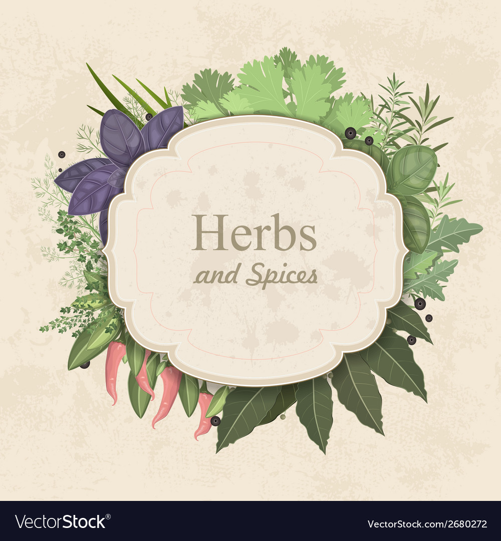 Vintage card with herbs and spices on paper vector | Price: 1 Credit (USD $1)