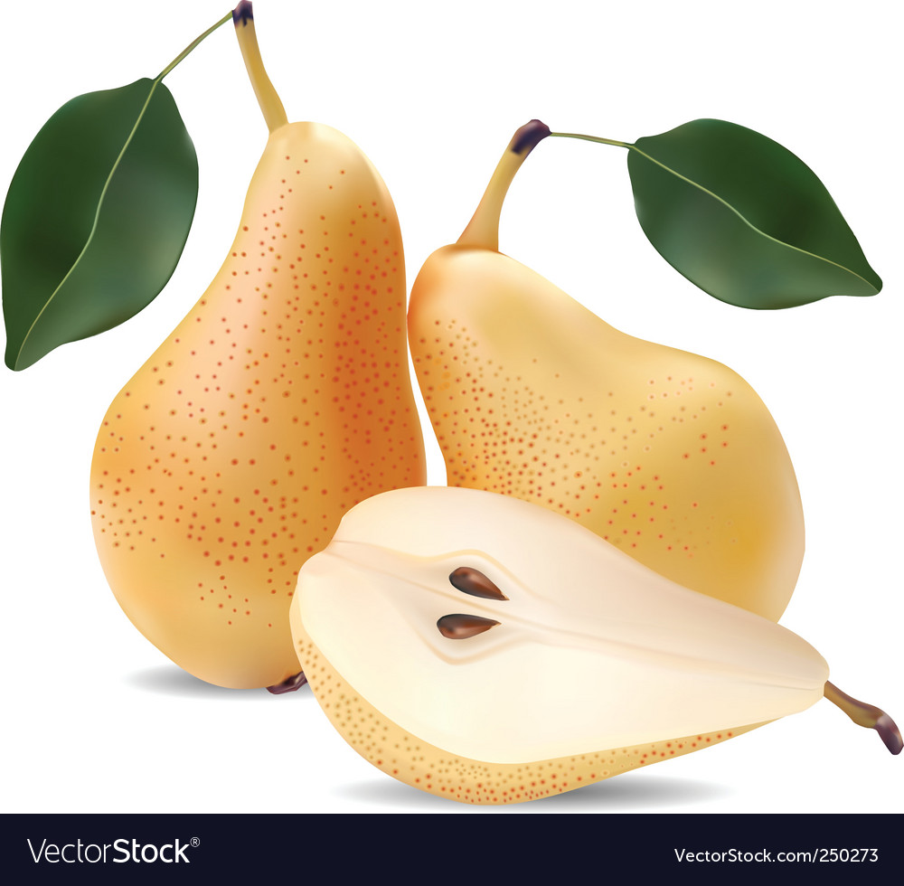 Pears and leaves vector