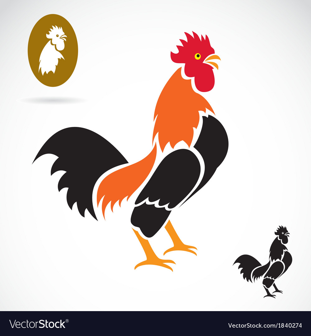 Cock vector   Price: 1 Credit (USD $1)