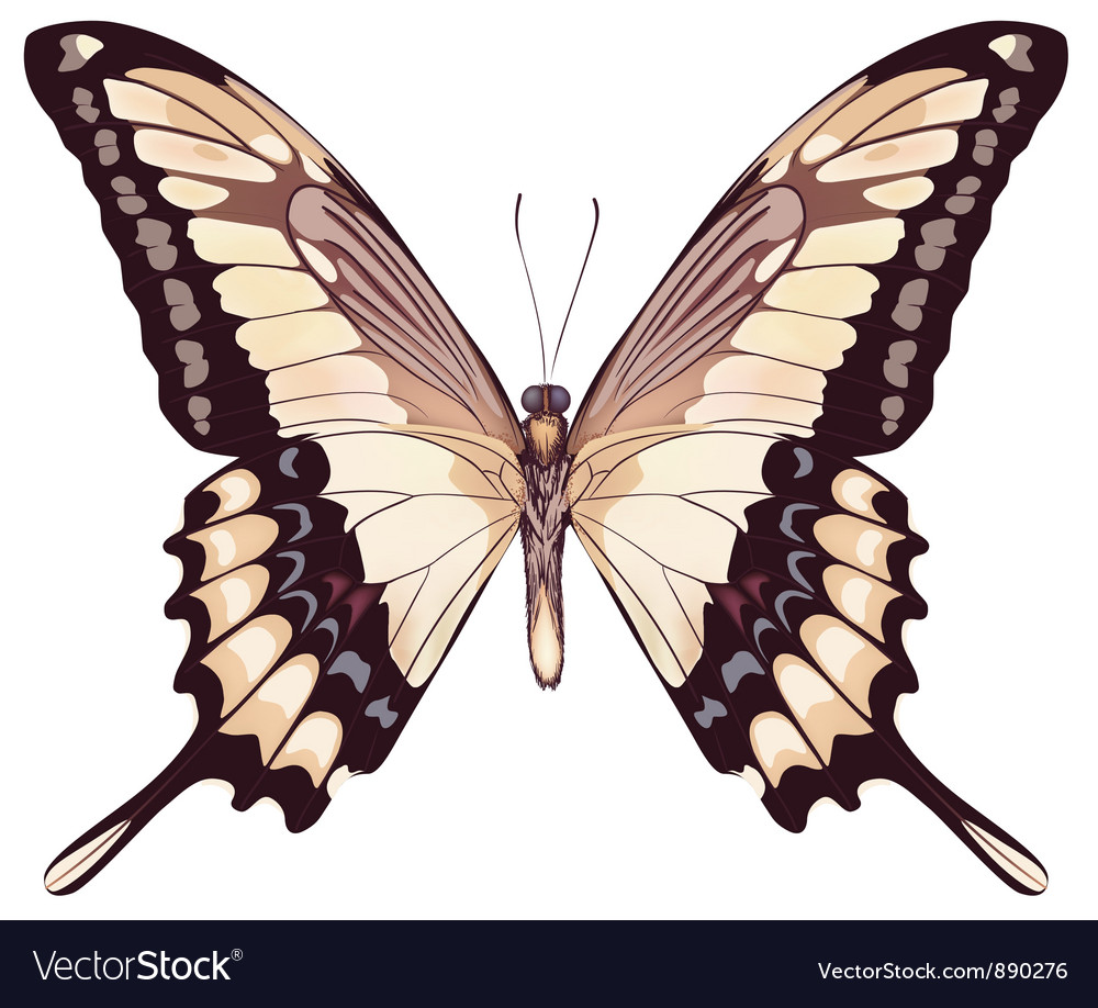 Isolated light butterfly vector | Price: 1 Credit (USD $1)