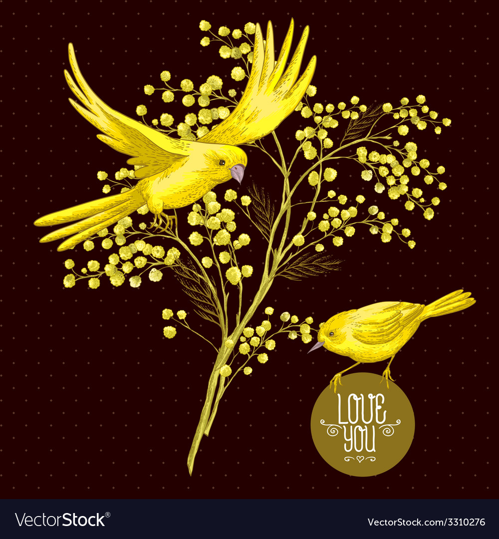 Sprig of mimosa and yellow bird spring background vector | Price: 1 Credit (USD $1)