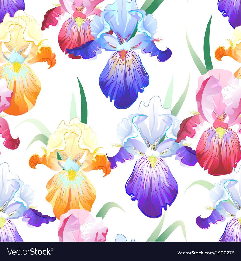 White seamless pattern with iris flowers vector | Price: 1 Credit (USD $1)