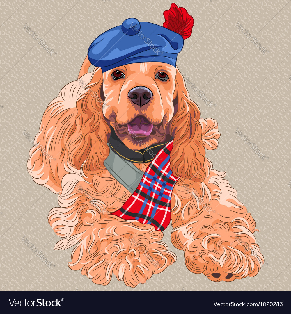 Dog american cocker spaniel in scottish ta vector | Price: 3 Credit (USD $3)