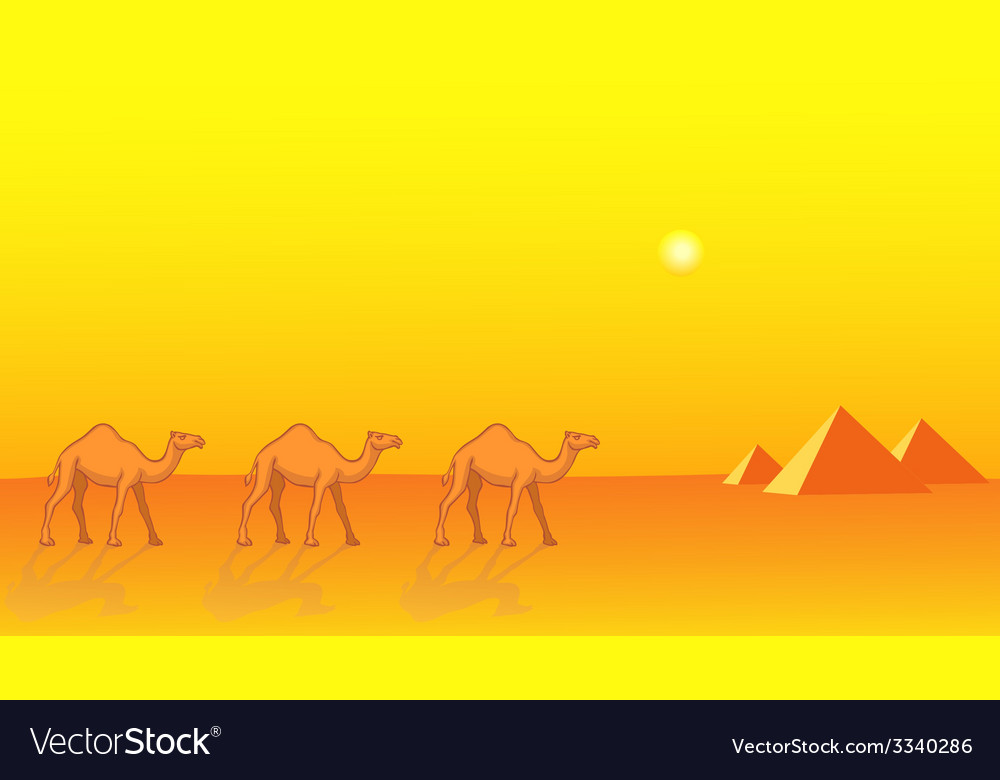 Camels and pyramids vector   Price: 1 Credit (USD $1)