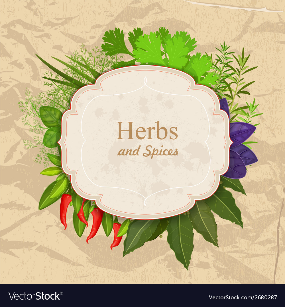 Vintage card with herbs and spices on crumpled vector | Price: 1 Credit (USD $1)