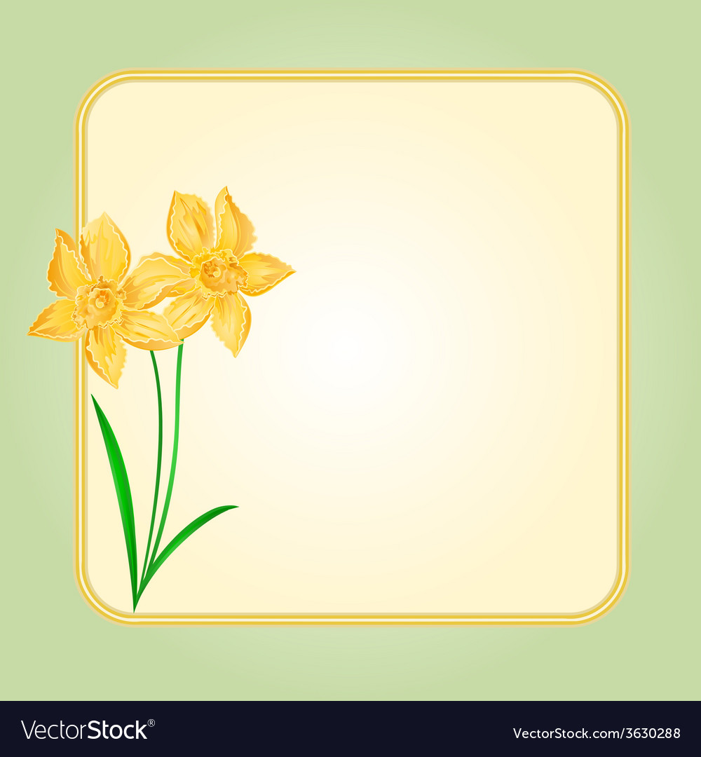 Daffodil spring flower background frame vector | Price: 1 Credit (USD $1)