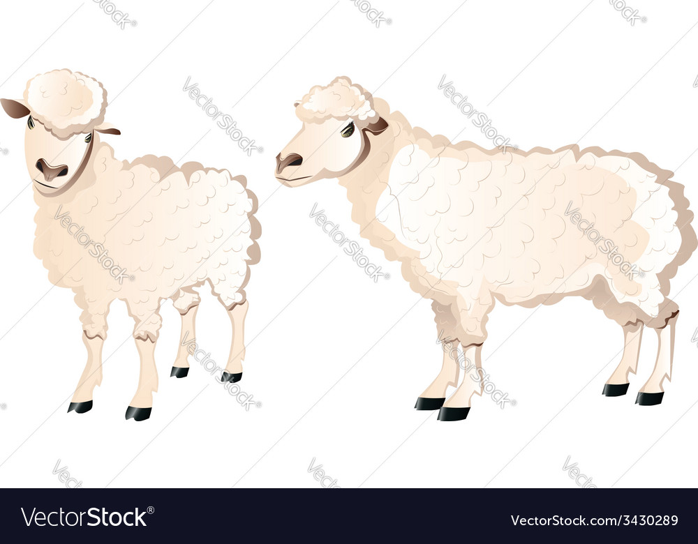 Sheep character vector | Price: 1 Credit (USD $1)