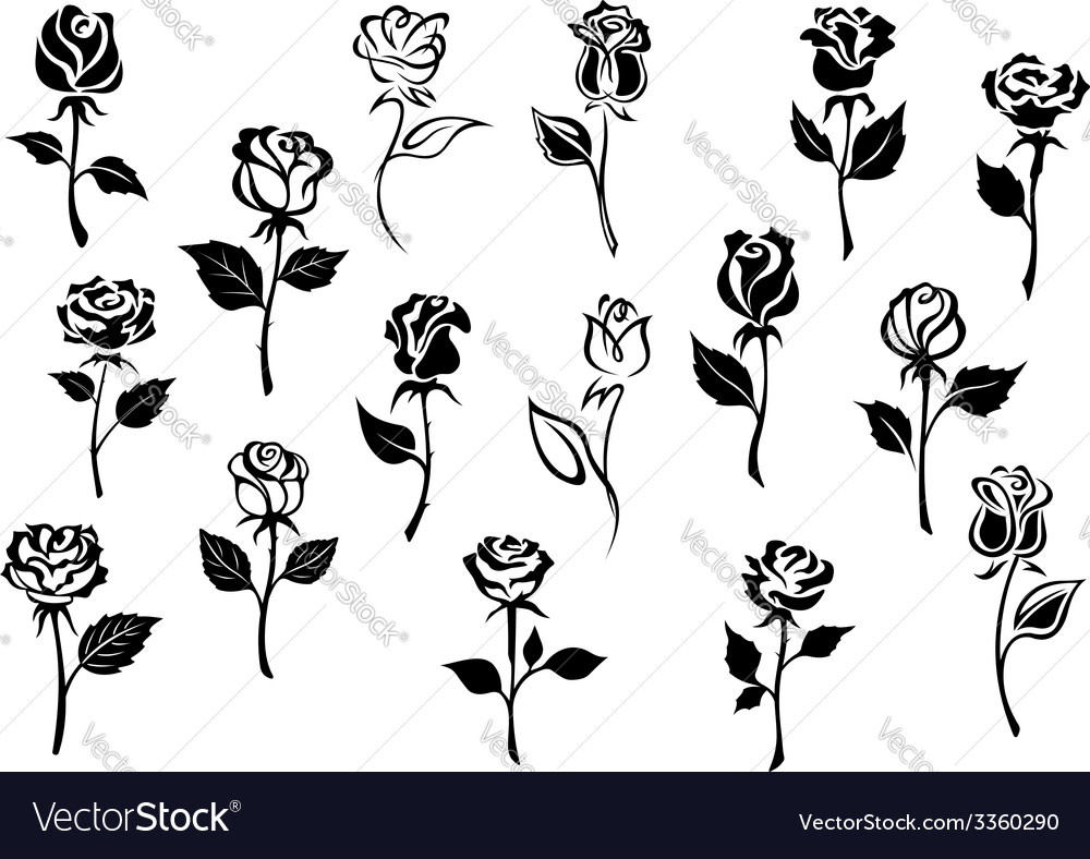 Black and white roses flowers vector | Price: 1 Credit (USD $1)