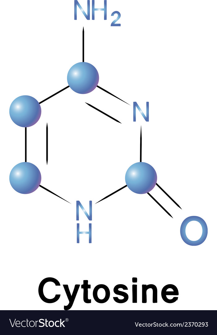 Cytosine vector | Price: 1 Credit (USD $1)