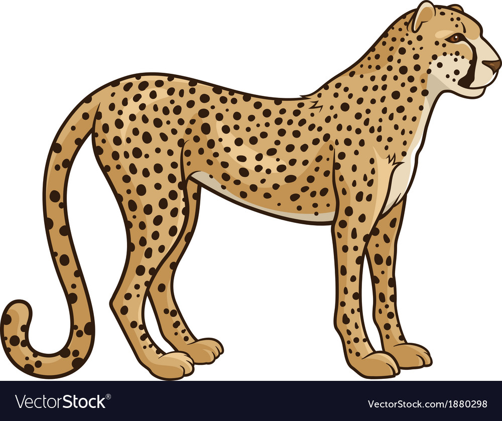 Cheetah vector | Price: 1 Credit (USD $1)
