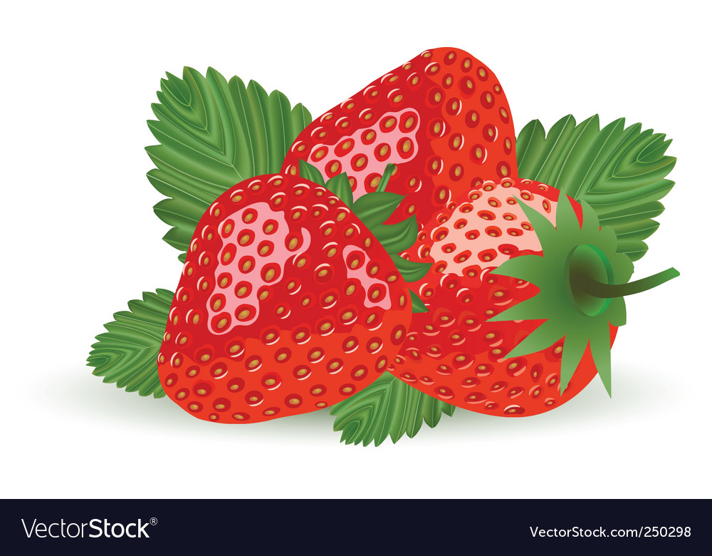 Strawberry isolated on white vector | Price: 3 Credit (USD $3)