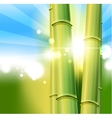 Bamboo nature background vector