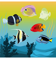 Colorful fishes vector