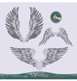 Wings set vector