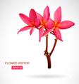 Image of frangipani flower vector