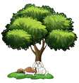 A cute dog under the tree vector