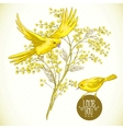 Sprig of mimosa and yellow bird spring background vector