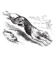 English greyhound vintage engraving vector