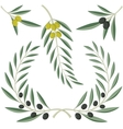 Olive branches vector