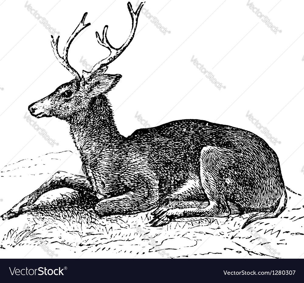 Mule deer vintage engraving vector | Price: 1 Credit (USD $1)