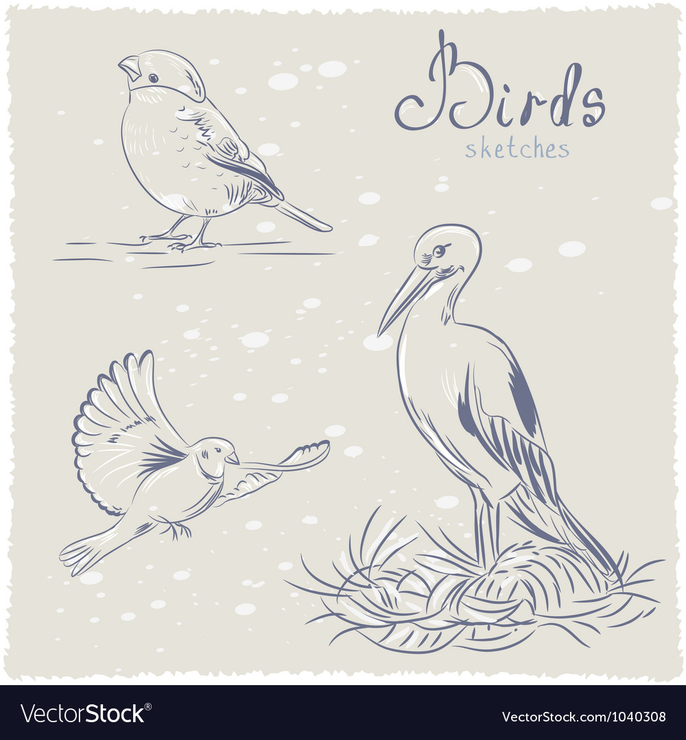 Bird sketch vector | Price: 1 Credit (USD $1)